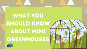 Mini Greenhouses blog