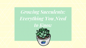 Growing Succulents Everything You Need to Know