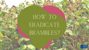eradicate Brambles BLOG