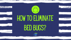 How to Eliminate Bed Bugs BLOG