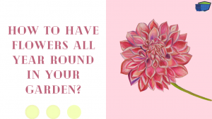 How to Have Flowers All Year Round in Your Garden